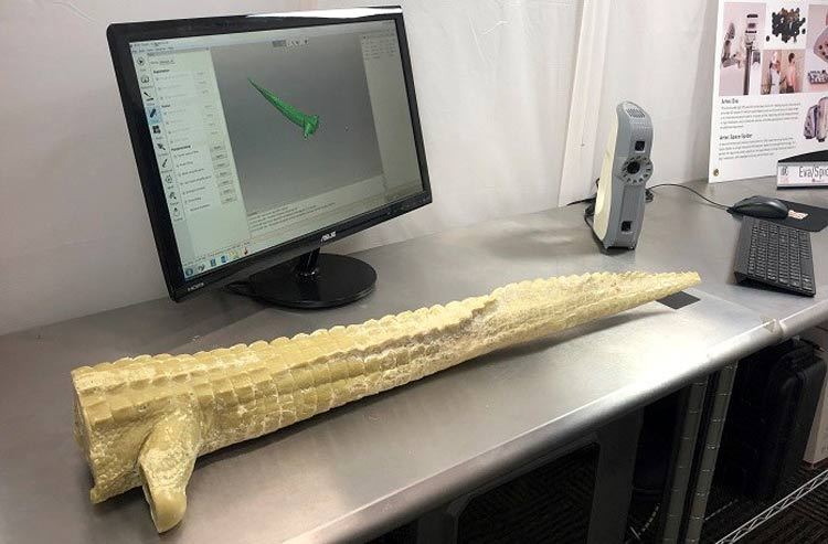 Prosthetic Tail using 3D Technology