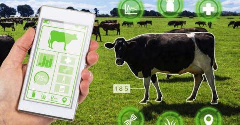 Role of IoT in Remote Monitoring of Livestock Health