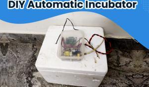 DIY Automatic Incubator